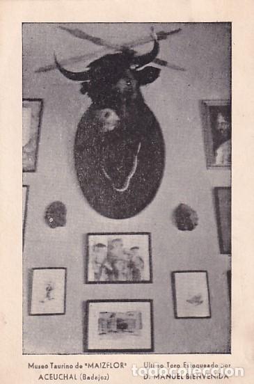 MUSEO TAURINO DE MAIZFLOR, ÚLTIMO TORO ESTOQUEADO POR D. MANUEL BIENVENIDA. ACEUCHAL (BADAJOZ) FIRMA (Postales - España - Extremadura Antigua (hasta 1939))