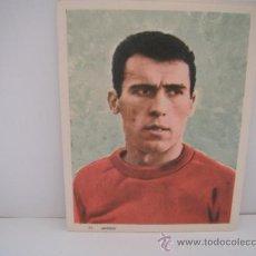 Coleccionismo deportivo: FOTO COLOREADA EN PAPEL DE AMANCIO (SECC.ESPAÑOLA) AÑO 1964.. Lote 33796506