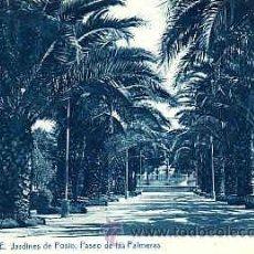 Postales: POSTAL DE ORENSE JARDINES DE POSIO PASEO DE LAS PALMERAS. Lote 11731016