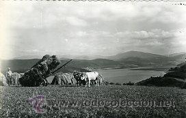RIBADEO (LUGO).- FAENA DEL CAMPO.- EDICIONES J.F.C.. FOTOGRÁFICA. (Postales - España - Galicia Moderna (desde 1940))