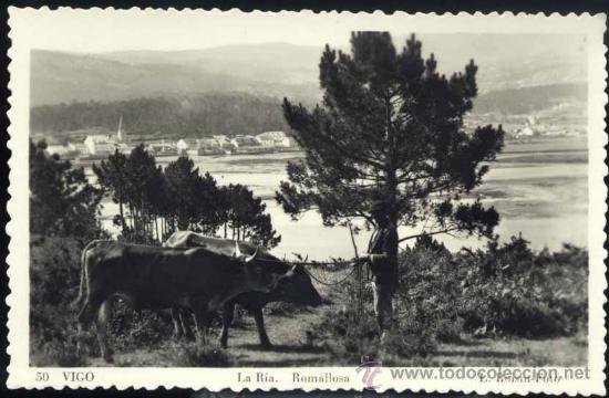 VIGO (PONTEVEDRA).- LA RÍA.-RAMALLOSA (Postales - España - Galicia Moderna (desde 1940))