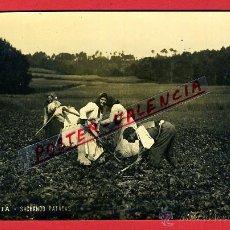 Postales: POSTAL LA CORUÑA, GALICIA , SACHANDO PATACAS , FOTOGRAFICA ,ORIGINAL , P98997. Lote 47329861