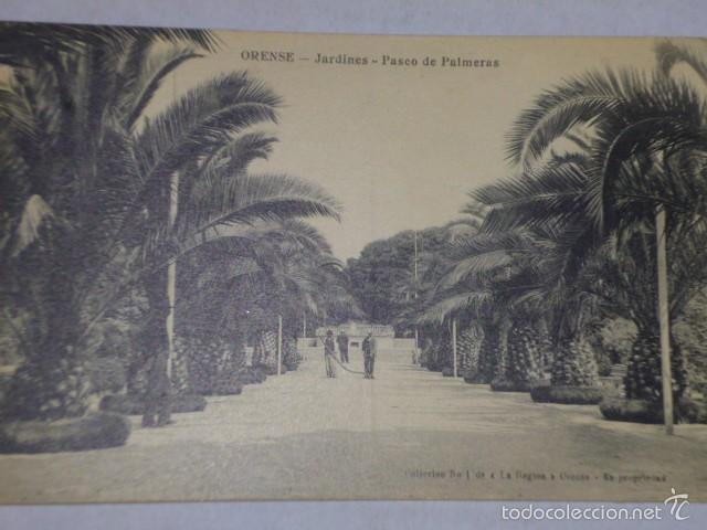 ORENSE.-JARDINES.- PASEO DE PALMERAS. (Postales - España - Galicia Antigua (hasta 1939))