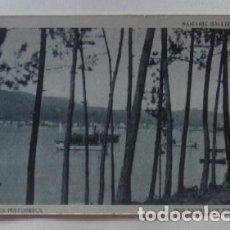 Postales: POSTAL AROSA PINTORESCA - PAISAJES GALLEGOS - POR ENTRE LOS PINOS. Lote 62162892