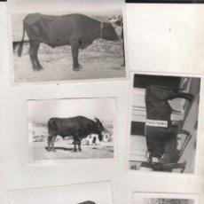 Postales: LOTE DE 5 FOTOGRAFIAS, VILLAR FOTO ORENSE. FERIA GANADO, TERCER PREMIO. GANADERIA. TORO. VACA. Lote 77317185