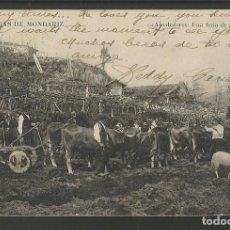 Postales: AGUAS DE MONDARIZ-UNA FERIA DE GANADO-MADRID POSTAL-POSTAL ANTIGUA-(57.296). Lote 152960070