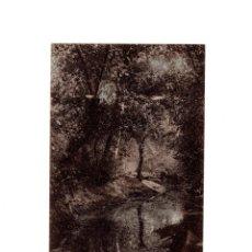 Postales: AGUAS DE CABREIROA.(VERIN, ORENSE).- UN RINCON DEL PARQUE. Lote 154862034