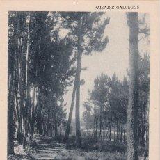 Postales: PAISAJES GALLEGOS. AROSA PINTORESCA. 3 - PINAR DEL FERRAZO. SIN CIRCULAR.. Lote 288457993