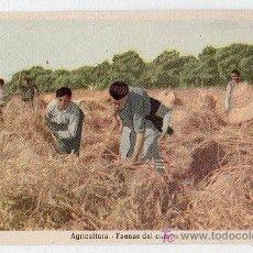 Postales: TARJETA POSTAL. AGRICULTURA, FAENAS DEL CAMPO. EDICIONES DE LA VICESECRETARIA DE EDUCACION POPULAR. Lote 17598836