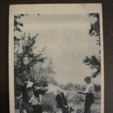 Postales: SECCION FEMENINA DE F.E.T. Y LAS J.O.N.S.-HERMANDAD CIUDAD CAMPO-JOSE ANTONIO-POSTAL ANTIGUA(68.251). Lote 195505937