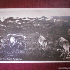 Postales: POSTAL - EUROPA - NORUEGA - VED GROTLI TURISTHOTEL - ENERET 1924 - CARL NORMANN, HAMAR - NUEVA -. Lote 56651627