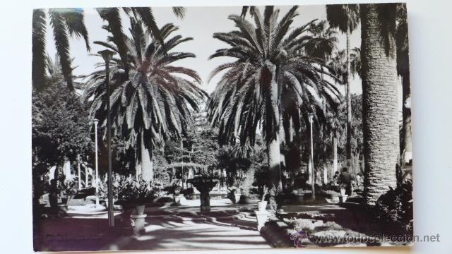 MELILLA. PARQUE HERNÁNDEZ. FOTO IMPERIO (Postales - España - Melilla Moderna (desde 1940))