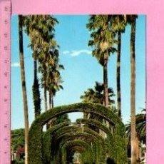 Postales: POSTAL DE MELILLA PARQUE HERNÁNDEZ Nº1504 EDITOR BEASCOA SIN CIRCULAR. Lote 122059063