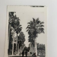 Postales: MELILLA - PARQUE HERNÁNDEZ - Nº 22 ED. RAFAEL BOIX. Lote 270217163