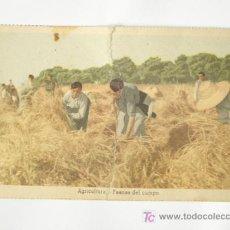 Postales: POSTAL DE EDUCACIÓN POPULAR - AGRICULTURA - FAENAS DE CAMPO -FALANGE. Lote 26556603