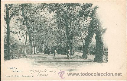 LORCA – ALAMEDA – DIARIO DE AVISOS, CORREDERA 35 (Postales - España - Murcia Antigua (hasta 1.939))