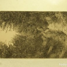 Postales: RARA YECLA MURCIA 20 EL CAÑO FOTO RIPOLL . Lote 185880358