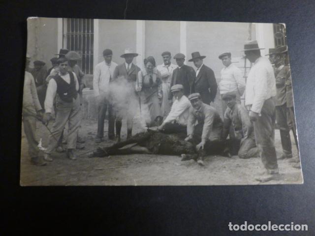 CARAVACA MURCIA MARCANDO UN CABALLO POSTAL FOTOGRAFICA HACIA 1920 (Postales - España - Murcia Antigua (hasta 1.939))