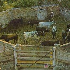 Postales: TARJETA POSTAL DE PAMPLONA. ENCIERRO DE TOROS EN LA CORRALETA. Lote 9968165