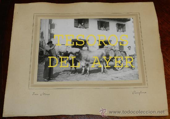 ANTIGUA FOTOGRAFIA MENA, PAMPLONA, BUEYES TIRANDO DE CARRO CON BARRICAS DE LA BODEGA PABLO ESPARZA, (Postales - España - Navarra Antigua (hasta 1.939))