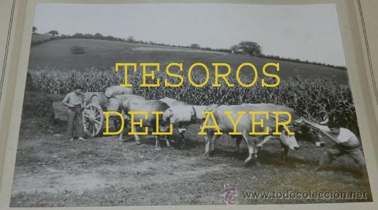 Postales: ANTIGUA FOTOGRAFIA MENA, PAMPLONA, BUEYES TIRANDO DE CARRO CON BARRICAS DE LA BODEGA PABLO ESPARZA, - Foto 2 - 36237707