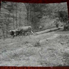 Postales: FOTOGRAFIA ANTIGUA DE CORTE DE ARBOLES EN EL BOSQUE DE IRATI (NAVARRA) )), MIDE 16,5 X 16,5 CMS. FOT. Lote 45057836