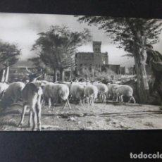 Postales: NAVARRA PASTOR CON REBAÑO EN LOCALIDAD A IDENTIFICAR POSTAL FOTOGRAFICA. Lote 154310598