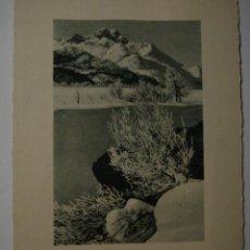 Postales: 76 NIEVE NAVIDAD POSTAL ORIGINAL AÑOS 1920 - MAS EN MI TIENDA. Lote 28584361