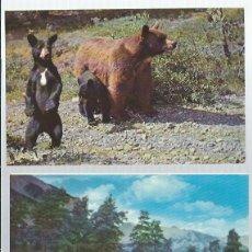 Postales: 8 POSTALES DE LA FAUNA DE CANADIAN ROCKIES ALBERTA. Lote 63485348