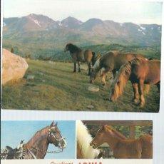 Postales: 4 POSTALES VARIADAS DE CABALLOS Y VACAS SIN CIRCULAR. Lote 63525156