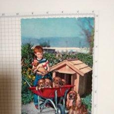 Postales: POSTAL Nº 6894 - NIÑO PERRS CARRETILLA - ED. CYZ - AÑO 1961. Lote 180888061