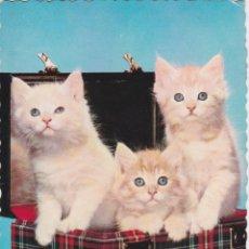 Postales: ANIMALES, GATOS – EDITA CYZ 6113 – ESCRITA 1963. Lote 289303743