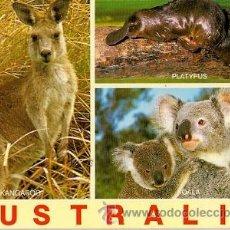 Postais: AUSTRALIA - KANGAROO, PLATYPUS AND KOALA. Lote 28486003