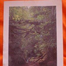 Postales: POSTAL DE SINGAPUR,JUNGLA, ESCRITA Y CON SELLO-1997. Lote 20753682