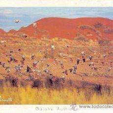 Postales: AUSTRALIA GALAHS AUSTRALIA POSTAL NO CIRCULADA. Lote 27974956