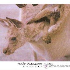 Postales: BABY KANGAROO, JOEY, AUSTRALIA - SIN CIRCULAR. Lote 34691510