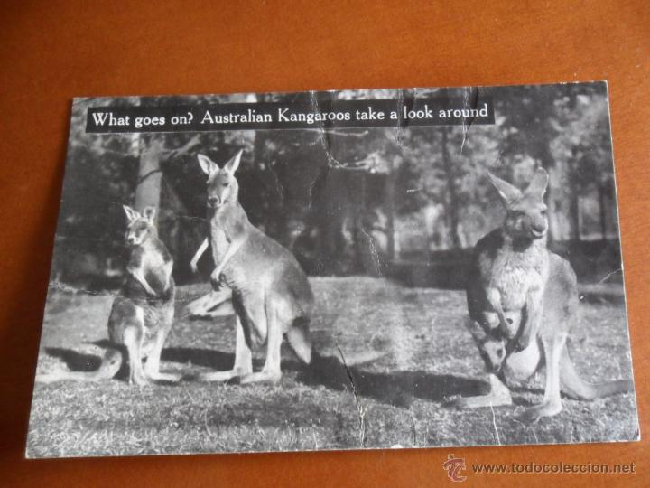 BONITA POSTAL DE AUSTRALIA TEMPERLEY INDUSTRIES 35 SPENCER HILL - CANGUROS (Postales - Postales Extranjero - Oceanía)