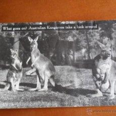 Postales: BONITA POSTAL DE AUSTRALIA TEMPERLEY INDUSTRIES 35 SPENCER HILL - CANGUROS. Lote 50505753