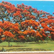 Postales: POSTAL ANTIGUA AUSTRALIA.- BRISBANE.- 10,3X6,7 CTMS. Lote 135789262