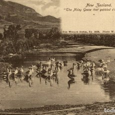 Postales: THE NOISY GEESE THAT GABBLED O ER THE POOL NEW ZEALAND POST CARD. Lote 183334897