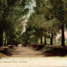 Postales: PINE TREE AVENUE BOTANIC PARK ADELAIDE AUSTRALIA OCEANIA. Lote 184514491