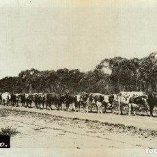 Postales: RPPC PINNAROO NEW POLICE STATION AUSTRALIA OCEANIA. Lote 184514538