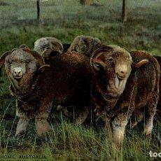 Postales: MERINO RAMS AT HOME AUSTRALIA OCEANIA. Lote 184514650