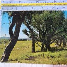 Postales: POSTAL DE AUSTRALIA. COUNTRY SCENE. 2679. Lote 192677587