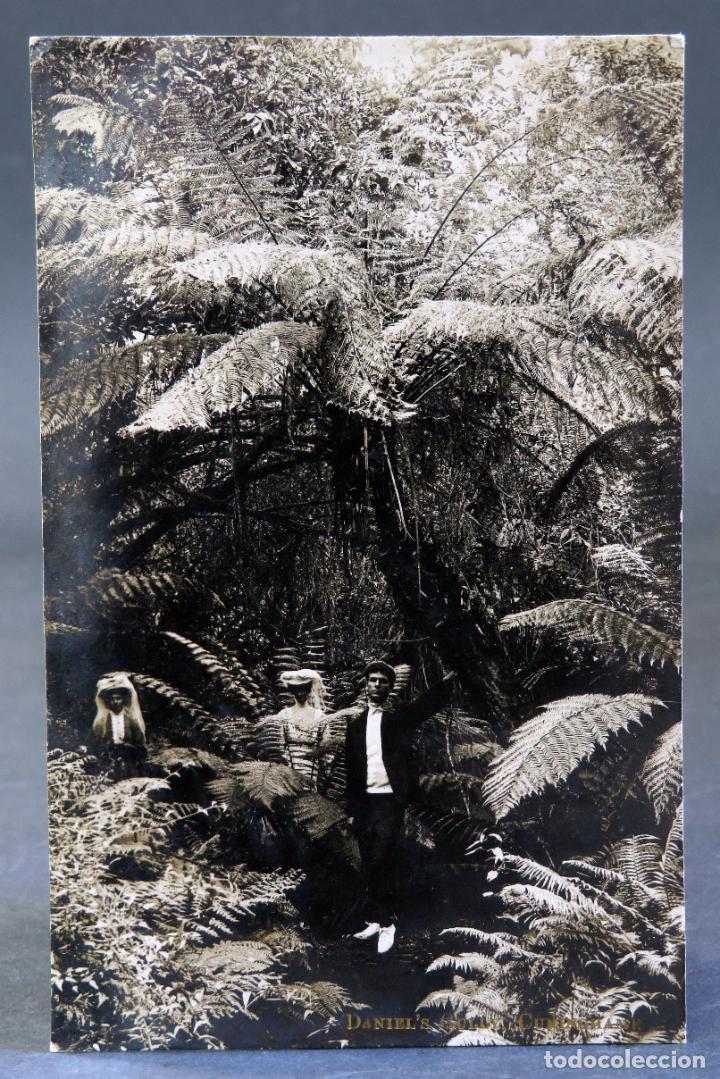POSTAL FOTOGRÁFICA VIAJEROS BOSQUE CUNINGHAM AUSTRALIA DANIEL GULLY ESCRITA 1911 (Postales - Postales Extranjero - Oceanía)