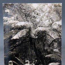 Postales: POSTAL FOTOGRÁFICA VIAJEROS BOSQUE CUNINGHAM AUSTRALIA DANIEL GULLY ESCRITA 1911. Lote 193717133