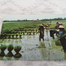 Postales: TAILANDIA. Lote 202630853