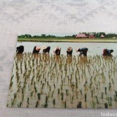 Postales: TAILANDIA. Lote 202631073