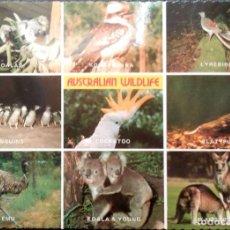 Postales: ANIMALES DE AUSTRALIA. AUSTRALIAN WILDLIFE. KOALAS, PINGÜINOS, CANGUROS, KOALA, PÁJARO LIRA. USADA.. Lote 210532933