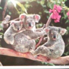 Postales: AUSTRALIA. KOALAS. USADA. COLOR. Lote 210532938